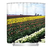 Tulip Town 11 Shower Curtain