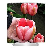 Tulip Town 15 Shower Curtain