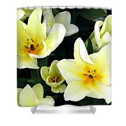 Tulip Town 16 Shower Curtain