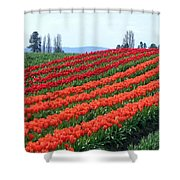 Tulip Town 18 Shower Curtain