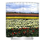 Tulip Town 4 Shower Curtain