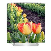 Tulip Town 6 Shower Curtain