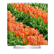 Tulip Town 7 Shower Curtain