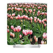 Tulip Town 8 Shower Curtain