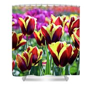 Tulip Treasures Shower Curtain