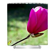 Tulip Tree Blossom Shower Curtain