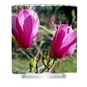 Tulip Tree Blossoms Shower Curtain