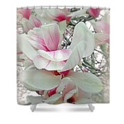 Tulip Tree Blossoms - Magnolia Liliiflora Shower Curtain