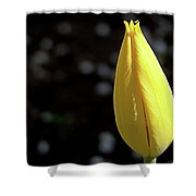 Tulip With Guest Shower Curtain