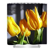 Tulipfest 2 Shower Curtain
