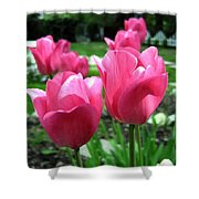 Tulipfest 3 Shower Curtain