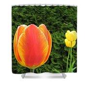 Tulipfest 4 Shower Curtain