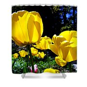 Tulipfest 5 Shower Curtain
