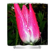 Tulipfest 6 Shower Curtain