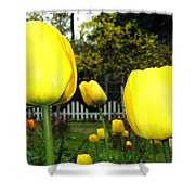 Tulipfest 8 Shower Curtain