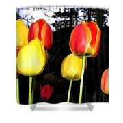 Tulipfest 9 Shower Curtain