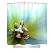 Tulips #12 Shower Curtain