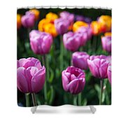 Tulips 14 Shower Curtain