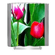 Tulips 2 Shower Curtain