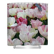 Tulips 3 Shower Curtain