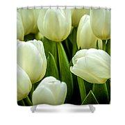Tulips 4 Shower Curtain