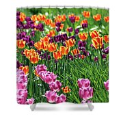 Tulips  6536 Shower Curtain