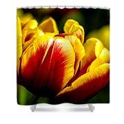 Tulips 7 Shower Curtain