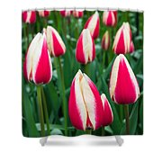 Tulips 7 Shower Curtain