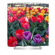 Tulips 9 Shower Curtain