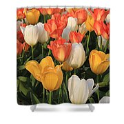Tulips Ablaze With Color Shower Curtain