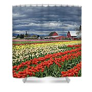 Tulips And Barn Shower Curtain