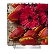 Tulips And Red Daisies  Shower Curtain