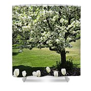 Tulips And Tees Shower Curtain