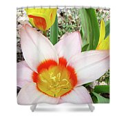 Tulips Artwork 9 Spring Floral Pink Tulip Flowers Art Prints Shower Curtain