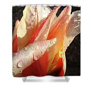 Tulips Artwork Flowers Floral Art Prints Spring Peach Tulip Flower Macro Shower Curtain