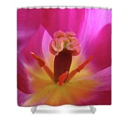 Tulips Artwork Pink Purple Tuli Flower Art Prints Spring Garden Nature Shower Curtain