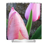 Tulips Artwork Pink Tulip Flowers Srping Florals Art Prints Baslee Troutman Shower Curtain