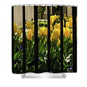 Tulips Behind Bars Shower Curtain
