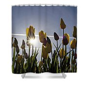 Tulips Blooming With Sun Star Burst Shower Curtain