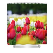 Tulips By Jared Windmuller - Tulip - Red -  Shower Curtain