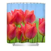 Tulips Close Up  Shower Curtain
