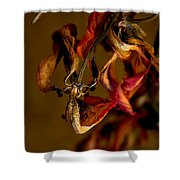 Tulip's Demise - A Natural Abstract Shower Curtain