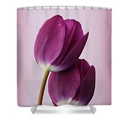 Tulips Shower Curtain by Diane Reed