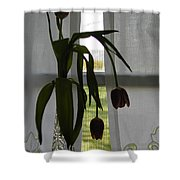 Tulips Shower Curtain by Don Perino