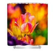 Tulips Enchanting 15 Shower Curtain