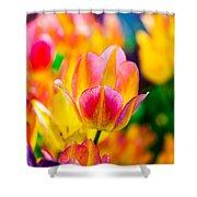 Tulips Enchanting 16 Shower Curtain