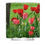 Tulips Flowers Art Prints Spring Tulip Flower Artwork Nature Art Shower Curtain