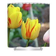 Tulips Garden Art Prints Yellow Red Tulip Flowers Baslee Troutman Shower Curtain