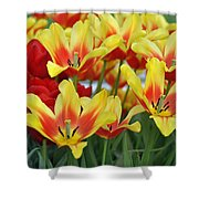Tulips Glorious Tulip Monsella Shower Curtain by Debra  Miller