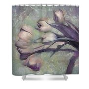 Tulips Going West Shower Curtain
